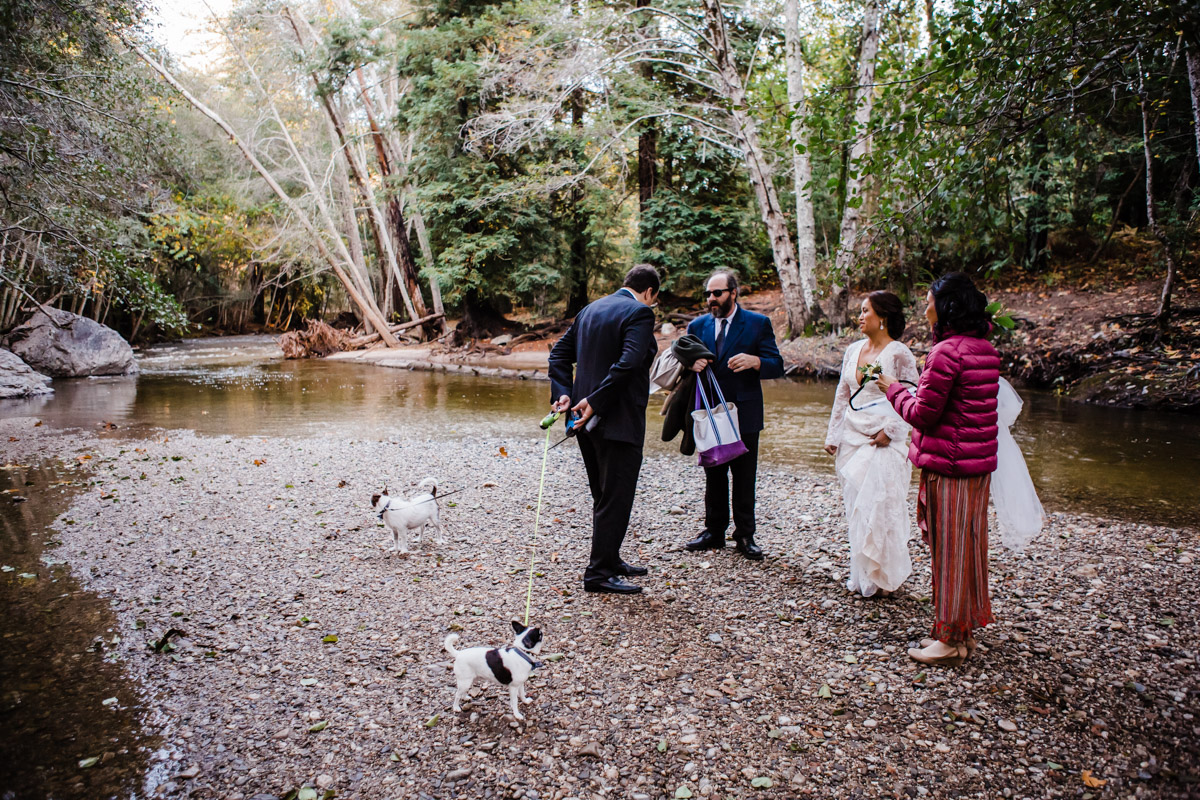 big sur wedding dog