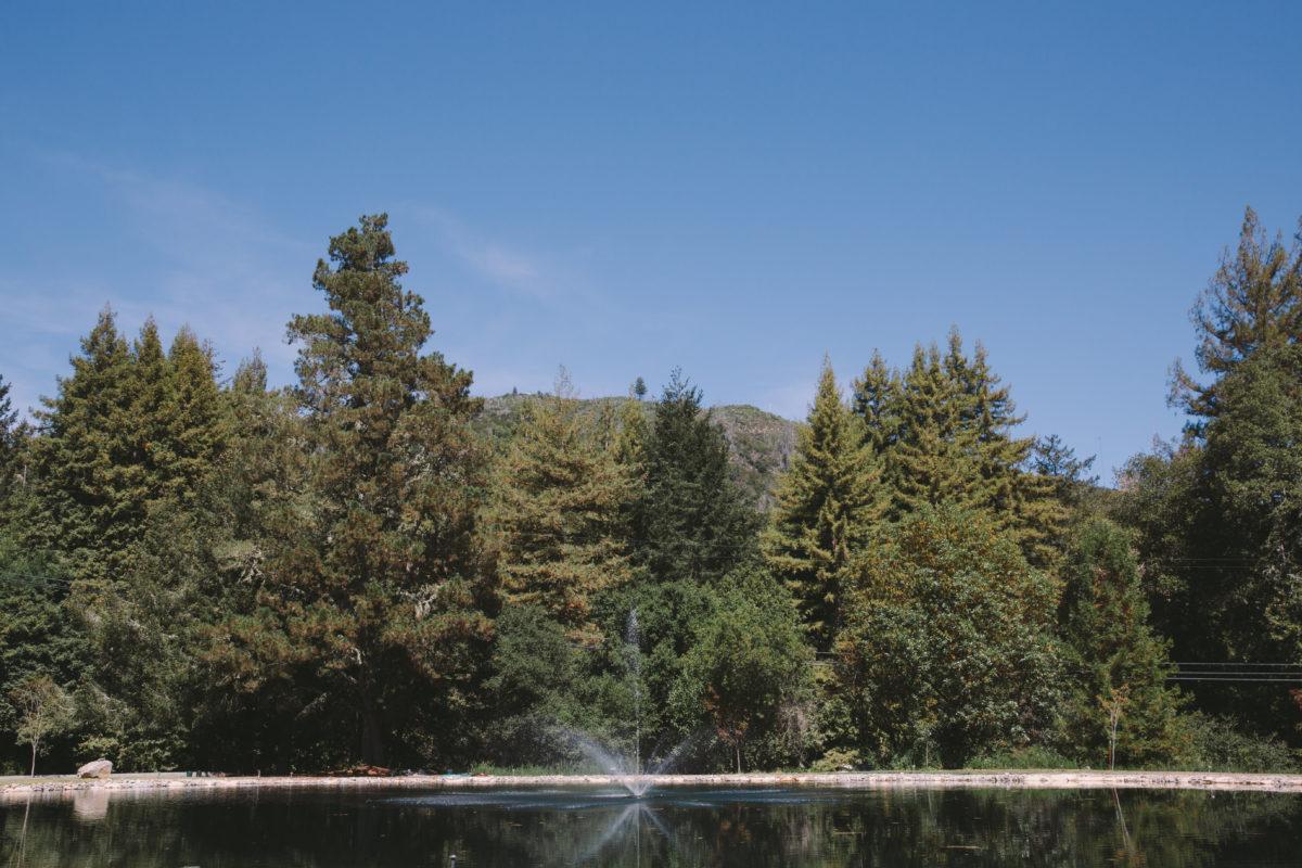 ampitheatre-of-the-redwoods-wedding